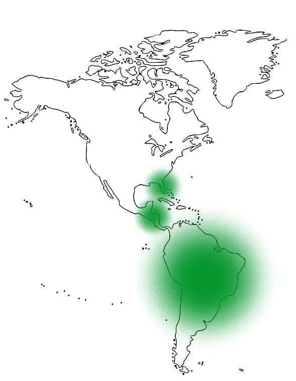 La carte du continent l'Amérique avec des zones d'apparence du palmier nain Saw Palmetto